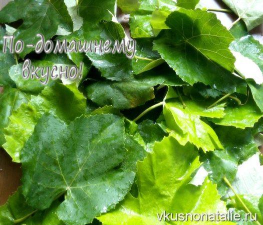 виноградные листья на зиму для долмы