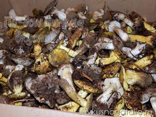 грибы рядовки на зиму