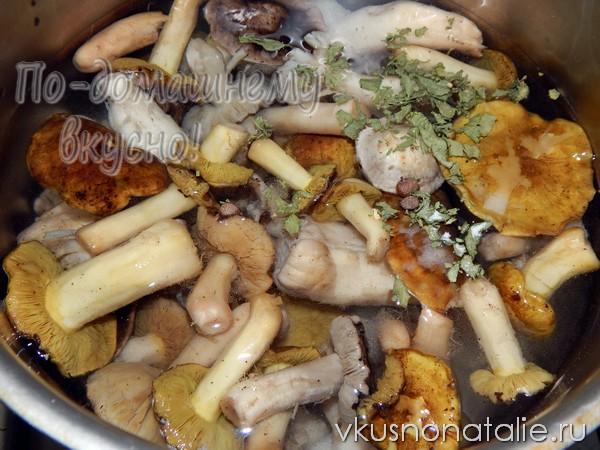 грибы рядовки на зиму замороженные