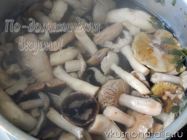 грибы рядовки на зиму замороженные рецепт